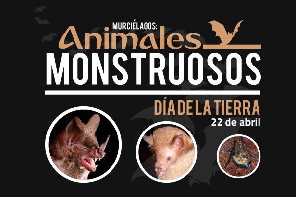 Murciélagos: fauna monstruosa con gran valor ecológico