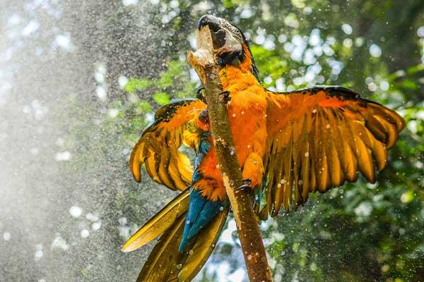 Fauna silvestre: afectada por la deforestación en Colombia