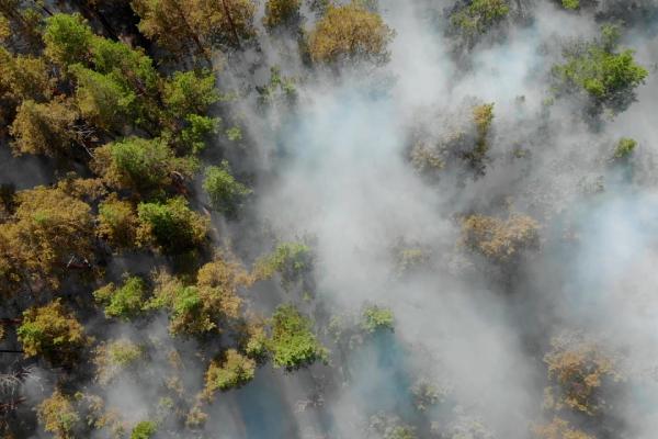 Las nubes de humo que devastan la Amazonía