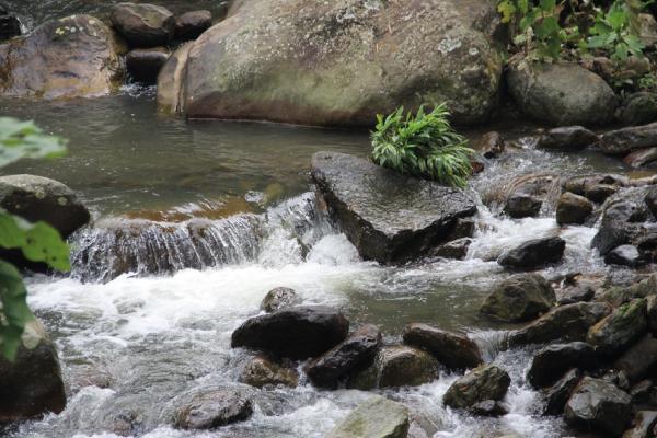 Profesores del Clúster de investigación NBIC ganan proyecto de regalías clave para la recuperación del Río Bogotá